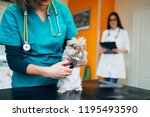 Stock photo lionhead rabbit at veterinary 1195493590