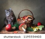Beautiful Cat And Basket With...