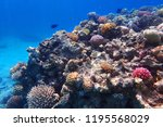 coral reef in egypt with color... | Shutterstock . vector #1195568029