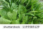 fresh green vegetables  | Shutterstock . vector #1195585129