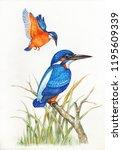kingfisher bird water color... | Shutterstock . vector #1195609339