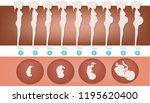 development of human pregnancy  | Shutterstock . vector #1195620400