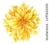 yellow dahlia  flower on an... | Shutterstock . vector #1195632433