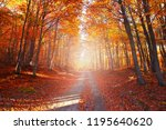 amazing road in the forest in... | Shutterstock . vector #1195640620