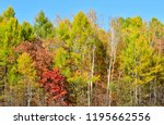 october forest  all the colors...   Shutterstock . vector #1195662556
