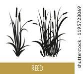 Sedge  Reed  Cane  Bulrush....