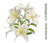 a branch of delicate white... | Shutterstock . vector #1195896040