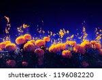 floating petals of cempasuchil  ... | Shutterstock . vector #1196082220