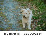 a small shaggy dog of sand... | Shutterstock . vector #1196092669