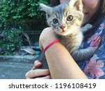 little kitten on arm | Shutterstock . vector #1196108419