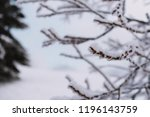 close up on froze  tree in the... | Shutterstock . vector #1196143759