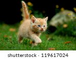 Stock photo young cat 119617024