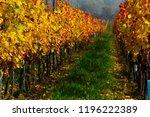 october vineyard  yellow and... | Shutterstock . vector #1196222389