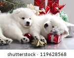 Stock photo sleeping white spitz and gifts christmas 119628568