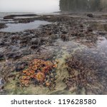 Tidal Pool Filled With Living...