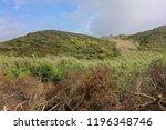 felled trees in the field  cut... | Shutterstock . vector #1196348746