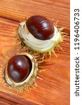 open chestnuts in shell on a... | Shutterstock . vector #1196406733