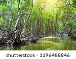 people boating in mangrove... | Shutterstock . vector #1196488846