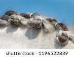 neck of dressage horse with... | Shutterstock . vector #1196522839