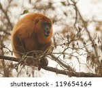 Small photo of Mantled howler (Alouatta seniculus) howling in a tree