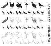 types of birds cartoon icons in ... | Shutterstock .eps vector #1196557609