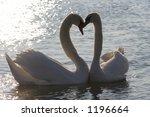 swans in love | Shutterstock . vector #1196664