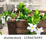 small white flowers in the... | Shutterstock . vector #1196676493