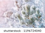 Pine Tree Branches Covered Wit...