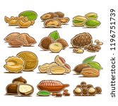 vector set of nuts  12 cut out... | Shutterstock .eps vector #1196751739