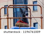 xolo the giant dog wakes on his ... | Shutterstock . vector #1196761009