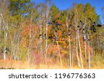 pond  painted in the autumn....   Shutterstock . vector #1196776363