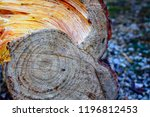 rings of a wooden trunk create... | Shutterstock . vector #1196812453