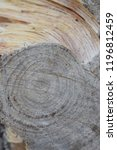 rings of a wooden trunk create... | Shutterstock . vector #1196812459