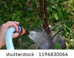 girl watering lemon plant | Shutterstock . vector #1196830066