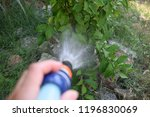 girl watering lemon plant | Shutterstock . vector #1196830069