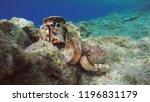 ancient greek amphorae relics... | Shutterstock . vector #1196831179