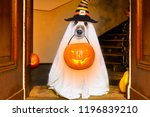 Stock photo dog sitting as a ghost for halloween in front of the door at home entrance with pumpkin lantern or 1196839210