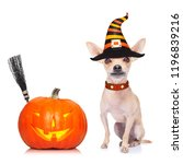 dog sitting as a ghost for... | Shutterstock . vector #1196839216