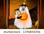 dog sitting as a ghost for... | Shutterstock . vector #1196843356