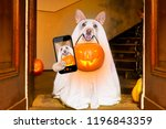 dog sitting as a ghost for... | Shutterstock . vector #1196843359