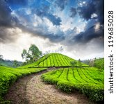 Постер, плакат: Tea plantation valley at