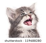 portrait of upset little kitten ... | Shutterstock . vector #119688280