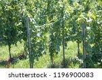 vaduz  liechtenstein  16th...   Shutterstock . vector #1196900083
