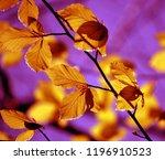 autumn leaves over a purple sky | Shutterstock . vector #1196910523