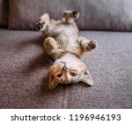 cute and funny kitten lying on... | Shutterstock . vector #1196946193