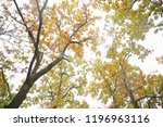 park in the fall | Shutterstock . vector #1196963116