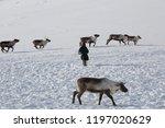 nenets reindeer mans catches... | Shutterstock . vector #1197020629
