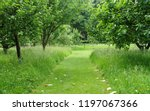 scenic view of a mowed grass... | Shutterstock . vector #1197067366