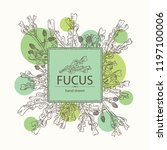 background with fucus  fucus... | Shutterstock .eps vector #1197100006