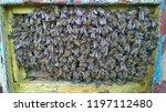 traditional rural beekeeping ... | Shutterstock . vector #1197112480